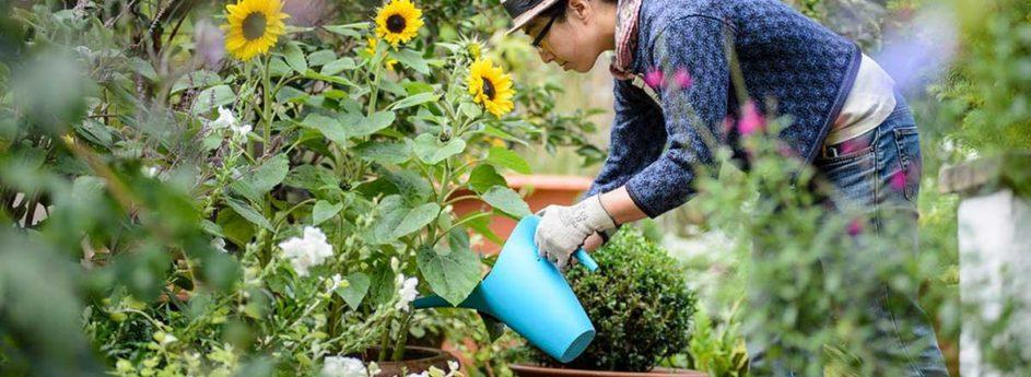 Načrtovanje in urejanje vrtov